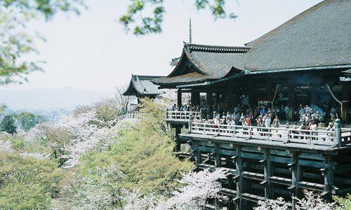 桜と清水の舞台