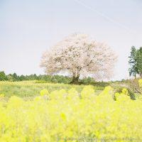 きらめく春