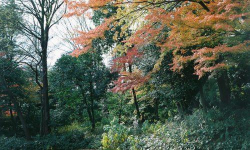 暖かい冬、木たちも迷う